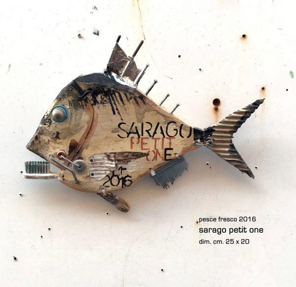 sarago petit one