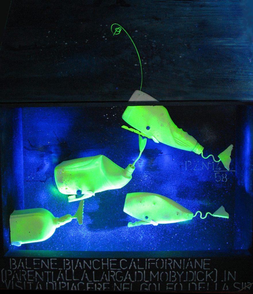 balene californiane… accese